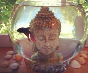 aquario, peixe, and buda image