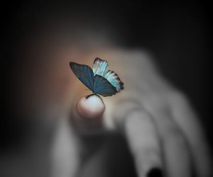 butterfly, blue, and photography image