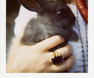 bunny, rabbit, and ring image