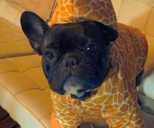 dog, cute, and giraffe image