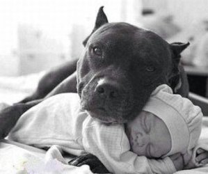 baby, dog, and hund image