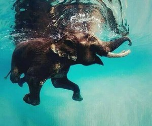 elephant, water, and cute image
