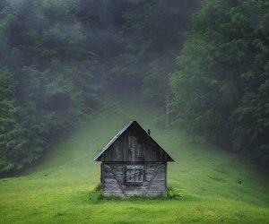 abandoned, atmospheric, and forest image
