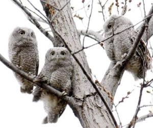 babies, owls, and owl image