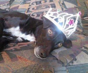 beautiful, dog, and princess image