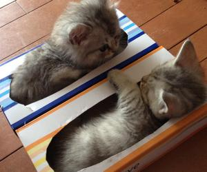 adorable, cats, and kitten image