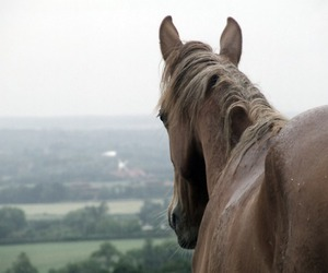 animal, rain, and horse image