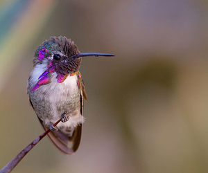 bird, hummingbird, and animal image
