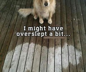 dogs, funny, and hilarious image