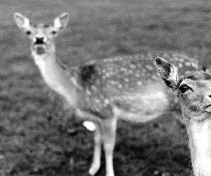 bambi, sad, and beauty image