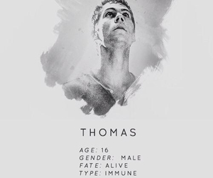 thomas and the maze runner image