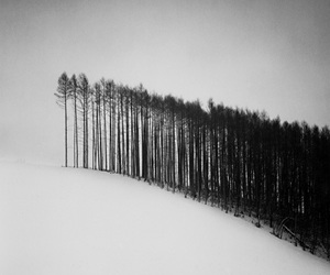 tree, snow, and forest image