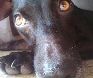 beautiful, black dog, and dog image