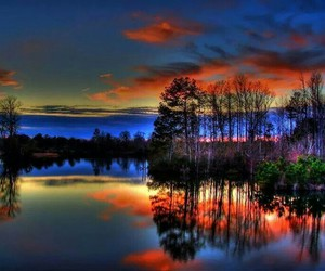 colors, nature, and trees image