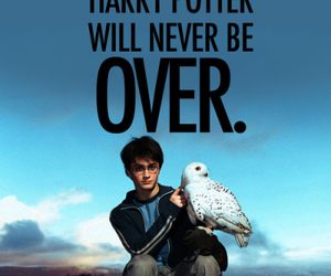 harry potter, hedwig, and potter image