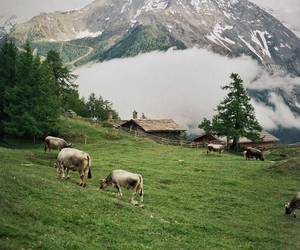 animals, hipster, and mountain image