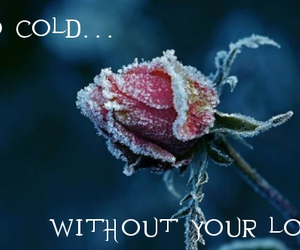 broken, cold, and flower image