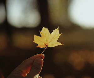 fall, leaf, and love image
