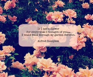 flowers, rose, and sad image