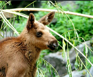 cuddly, wild, and elk image