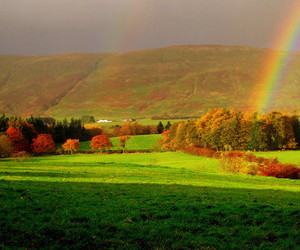grass, rainbow, and meadow image