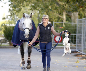 horse and longines image