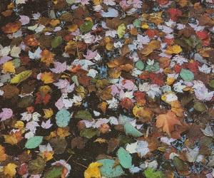 fall, leaf, and leaves image