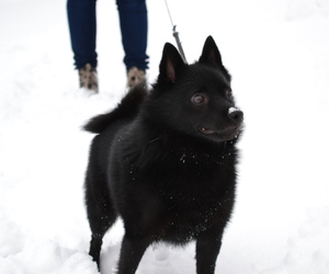 dog, snow, and miss him image