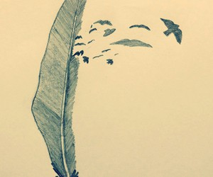 bird, drawing, and feather image