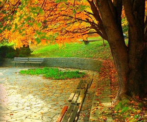autumn, colors, and park image