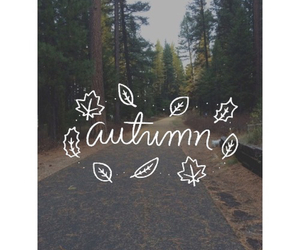 autumn, trees, and beauty image