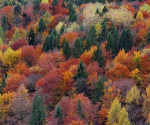 autumn, landscape, and forest image