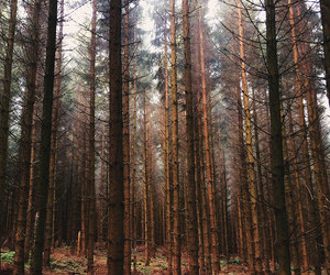 adventure, forest, and wanderlust image