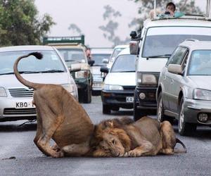 fun, lion, and street image
