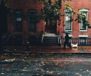 autumn, rain, and dog image