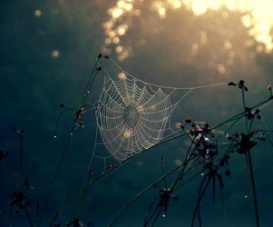 nature, spider, and photography image