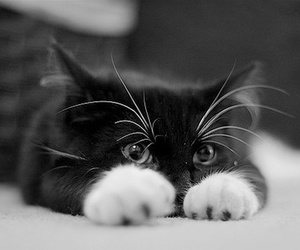 cats, kitten, and black cat image