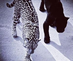 dope, wild, and animals image