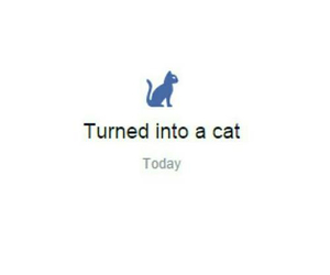 cat, facebook, and funny image