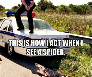 spider, funny, and lol image