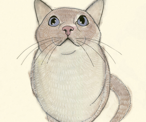 cat, drawing, and sketch image