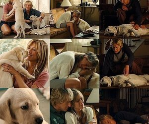 dog, marley and me, and movie image