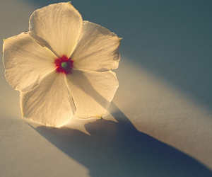 flower and white image