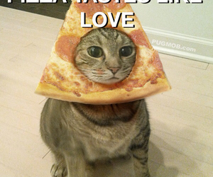 pizzacat, love, and cat image