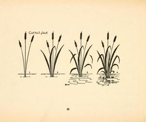vintage and cattail plant image