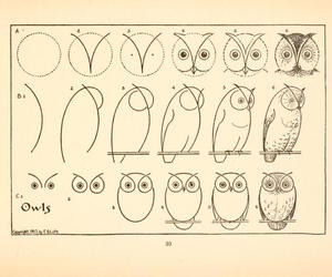 owl and bird image
