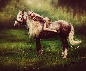 animal, beautiful, and photography image