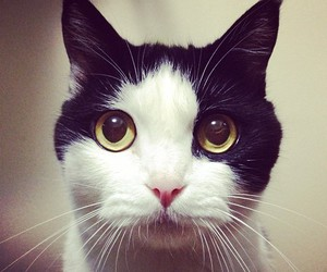 cat, eye, and cute image