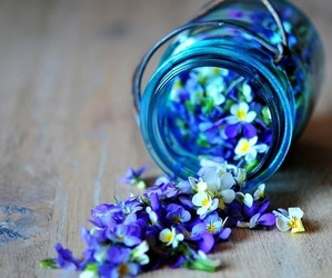 flowers, blue, and jar image