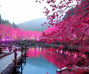 beautiful, pink, and japan image